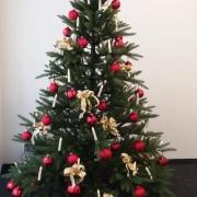 Hannes zeigt uns den Baum in der Geschäftsstelle Küps